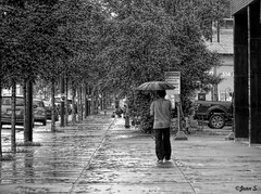 ... (Jean S..) Tags: monochrome street rain rainy people bw blackandwhite outdoors day trees reflexion cars umbrella
