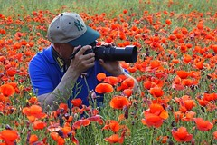 Amapoleando (jaecheve) Tags: amapola amapolas fotografo flores huesca aragon españa spain