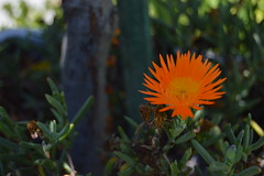 Flower B (CarterWang) Tags: orangeflower niceflower flower
