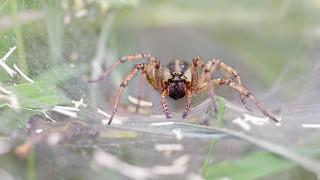 Arachnopobia
