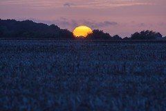 Muston Meadows Nature Reserve Sunset (Julian Barker) Tags: muston lincolnshire leicestershire border meadows blue orange sun orb setting sunset dusk field arable rural nature reserve minimalist julian barker canon dslr