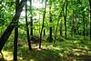 Forest (Łukasz Strączyński) Tags: forest wood sun summer tree green leaves sticks trunk countryside poland