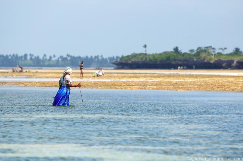 Woman on Zanzibar island seeking for a sea creatures
