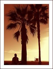 easy livin' at Venice Beach (antjeduvel) Tags: california sunset musician usa strand losangeles zonsondergang palmtree venicebeach musik distillery beachhouse palmen olympusc770uz abigfave platinumphoto