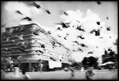 Novi Sad, Republika Srbjia (flevia) Tags: bw analog blackwhite serbia bn nophotoshop novisad biancoenero nikonfa analogico nikkor35mmf2 fomapan200 scannednegatives epsonv700 autaut epsonperfectionv700photo flevia imanalog jugosfera wwwfleviait republikasrbjia