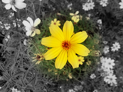(Regan Norton) Tags: plant flower color green nature yellow outdoors texas selective