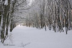 snowy lane (GdeB fotografeert) Tags: vakantie drenthe ees landvanbartje platinumheartaward wintersbeeld gdebfotografeert januari2010