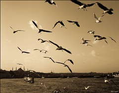 Once Upon A Time in the East (Andrei Dragomir) Tags: sea sky seagulls birds ferry sepia turkey landscape golden boat fly holidays istanbul mosque horn bosphorus andrei dragomir andreidragomir