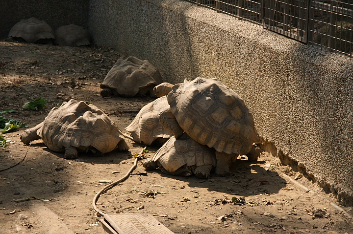 2010壽山動物園0006
