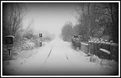 P1010310 verso nuovi orizzonti ([steTtì] sofasurfer since1974) Tags: neve inverno dicembre paesaggi freddo paesaggio friuli sanvitoaltagliamento