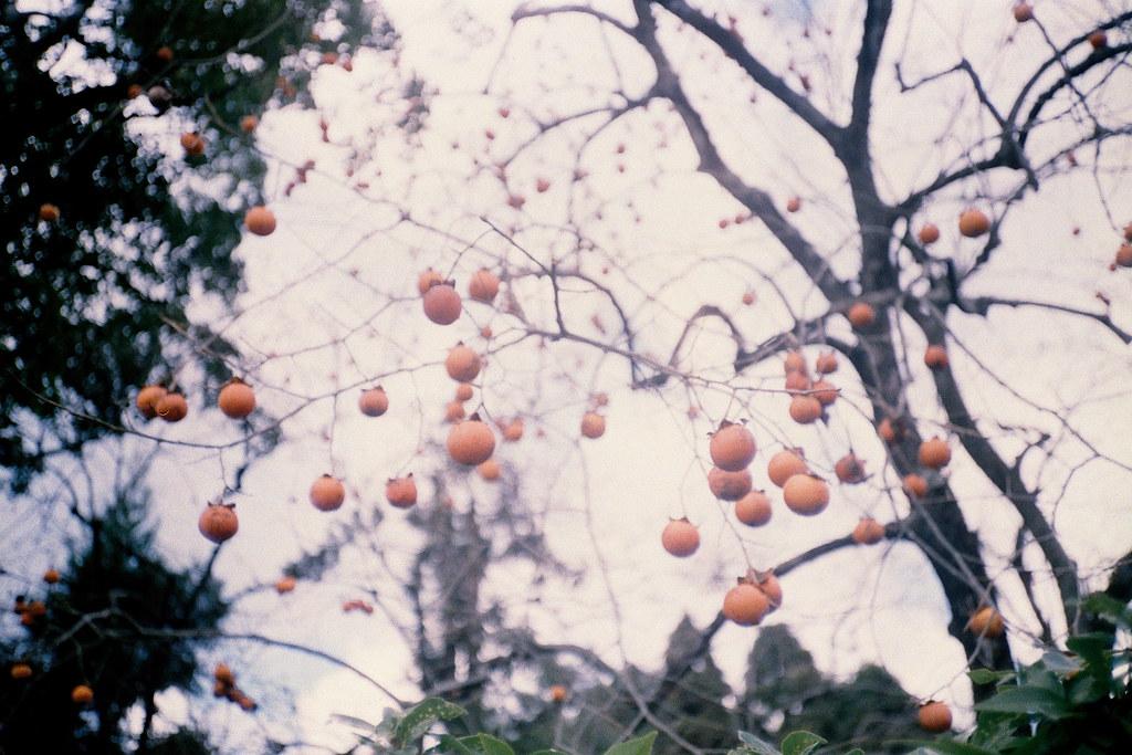 Nippon | 冬,柿
