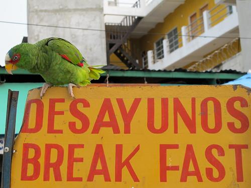 Breakfast Parrot