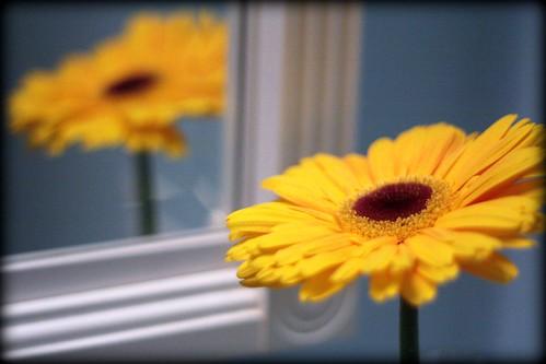 22/365 / yellow wk 24