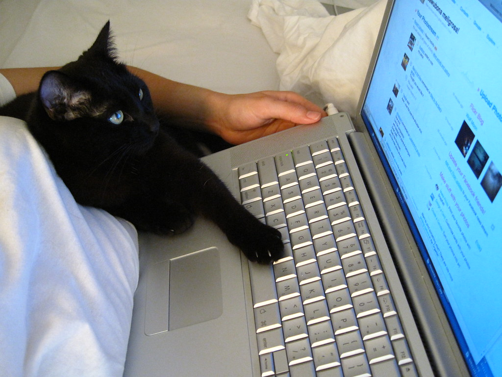 I IS IN YER INTERWEBZ