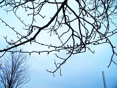 100_1520 (Erin Hoffman) Tags: park christmas blue sky tree wisconsin lights vibrant oshkosh menominee