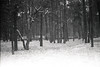 Fontainebleau (Lena in wonderland :D) Tags: camping schnee trees winter bw holiday snow elephant france cold tree nature rock analog forest canon frankreich rocks ae1 urlaub natur freezing climbing bouldering kalt schwarz fontainebleau klettern kälte weis bouldern