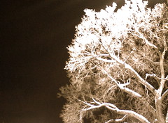 Powderhorn Park Tree