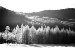 Larch (threepinner) Tags: canon hokkaido tmax north  100 hokkaidou 200mm selfdeveloped av1 northernjapan nfd