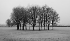 No Golf today (1972Photo) Tags: trees bw