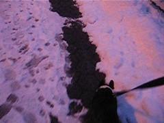 walking with the murph SNOWMAGEDDON! 051 (video) (setlasmon) Tags: new york nyc dog snow newyork cold love ice dogs boston puppy fun bostonterrier photography seth puppies play photos manhattan powder terrier photoediting gramercypark murph murphy newyorkers gramercy icecold snowpocalypse boogerboy snowmageddon setlasmon murphinald sethalexanderlassman sethlassman setalexandor snowtoriousbig powdermania