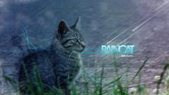Rain ([Sies:OFF]) Tags: rain photoshop lluvia mixed colores gato diseo experimento osorno sies