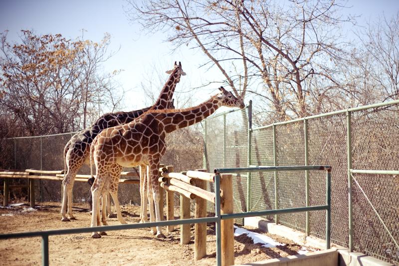 Zoo (5 of 15)