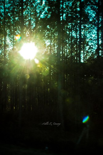 Sunlight through the woods