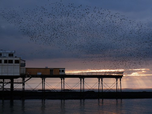 12069 - Starlings over Aberystwyth Pier