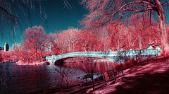 Bow Bridge Red (crankykoopa) Tags: trees wild sky panorama newyork color nature leaves architecture buildings crazy spectrum surreal funky full infrared false centralparknyc olympuse410 bw040yelloworangefilter bw040