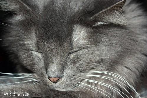Sleeping Beauty.....
