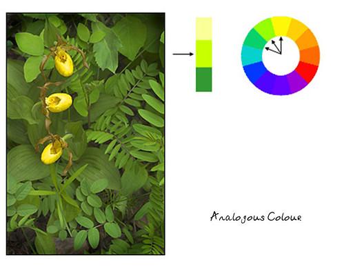 H4038 - Analogous Colour
