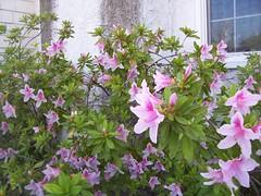 Garden Blooms March 15, 2010 - 5