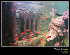 Sealife 011 (Nuno-Gomes) Tags: life light sea fish water aquarium interesting fantastic bestof underwater shot great best explore porto greatshot colored cave oporto oceanarium peixes oceanario nunogomes excelent mygearandmepremium mygearandmebronze mygearandmesilver sealifeporto mygearandmegold mygearandmeplatinum mygearandmediamond ngomes