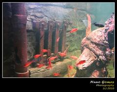Sealife 011 (Nuno-Gomes (Enough is enough)) Tags: life light sea fish water aquarium interesting fantastic bestof underwater shot great best explore porto greatshot colored cave oporto oceanarium peixes oceanario nunogomes excelent mygearandmepremium mygearandmebronze mygearandmesilver sealifeporto mygearandmegold mygearandmeplatinum mygearandmediamond ngomes