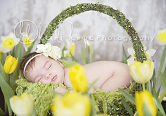 little flower (Heidi Hope) Tags: sleeping irish baby flower green yellow garden spring basket newborn daffodil tulip stpatricksday headband