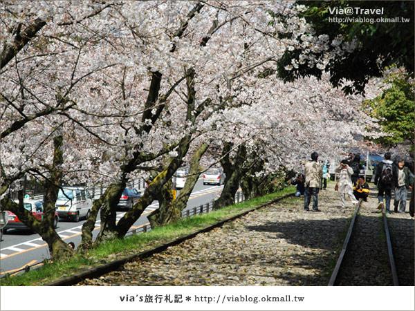 【via京都賞櫻行】鐵道上的櫻花美景~蹴上鐵道6
