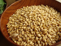 CSA Winter Share 7: Wheat Berries