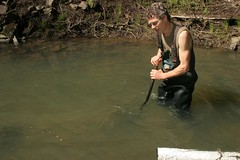 (Salmon Protection And Watershed Network) Tags: spawn monitoring