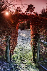 Over the hedge (rmrayner) Tags: winter sunset sun garden frozen frost arch lawn devon hedge gateway canoneos beech copperbeech ashcombe rmrayner ralphrayner