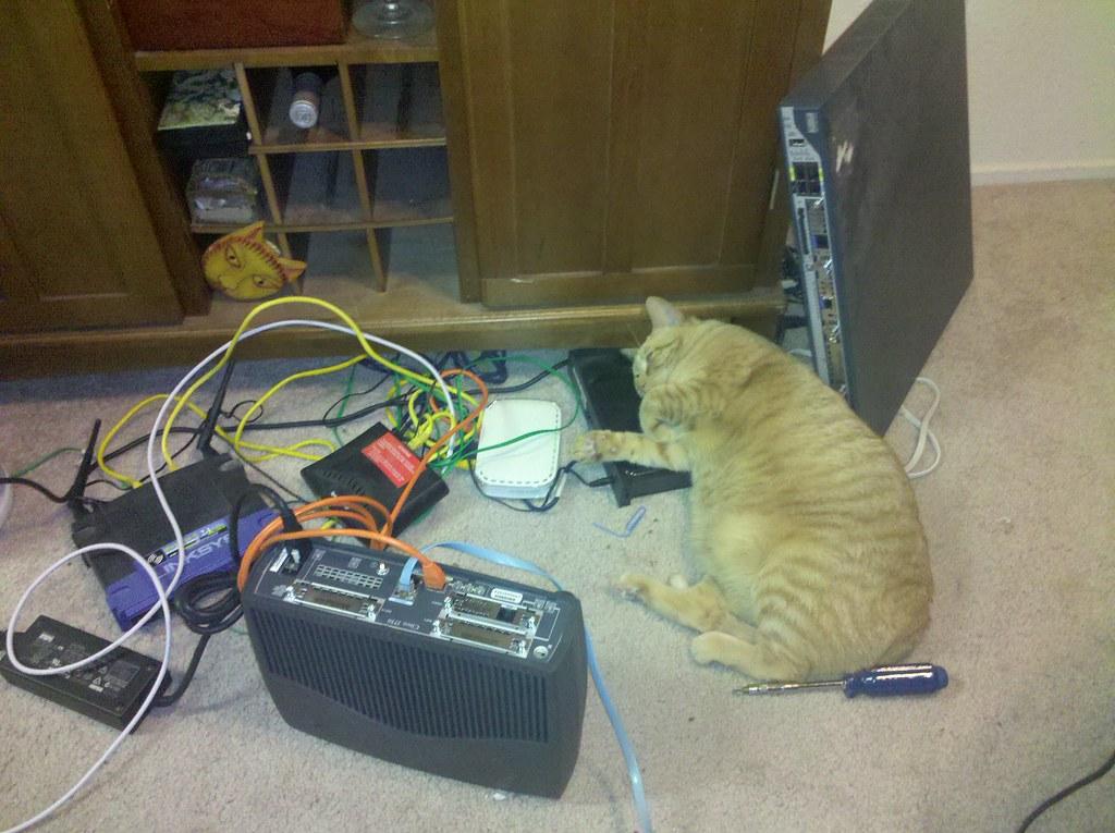 caturday - diz loves networking