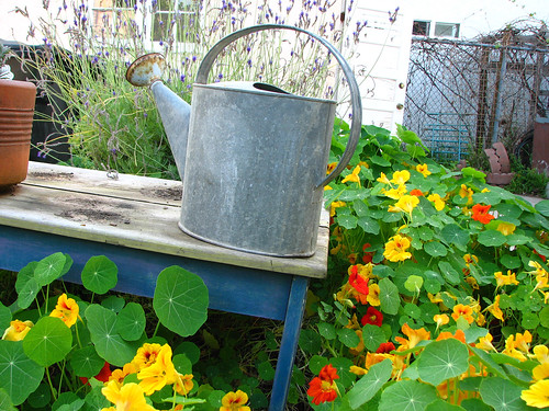 with watering can