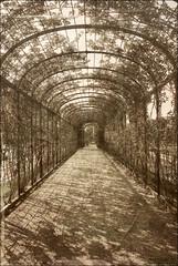 Percorso (Monica M. ®) Tags: texture sepia nikon tunnel arco giardino archi seppia viale elaborazione pergolato rampicanti d80 monicamongelli