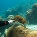 Cuddlefish #5