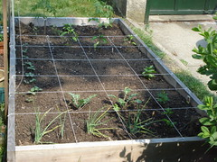 raised bed grid