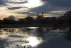 Bosque del Apache 2009 - reflection (thediscerningeye) Tags: sunset lake reflections frozenlake
