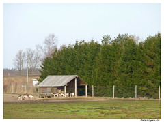 dyrepark_070410 (28) (fruNielsen (Helle Klitgaard)) Tags: spring april arden forr frunielsen helleklitgaard ardendyrepark