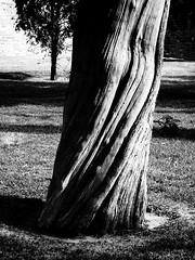 S90-20100313-011326 (Nivad) Tags: china travel winter bw tree beijing twist trunk templeofheaven