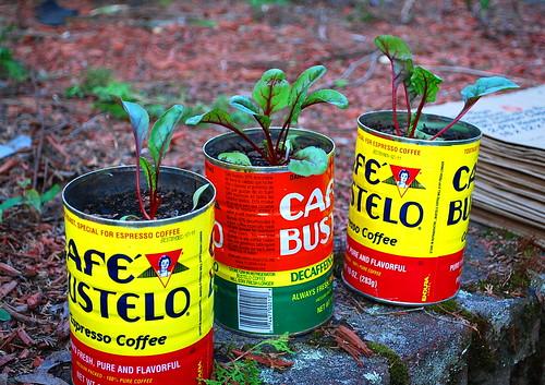 coffee can rhubarb chard