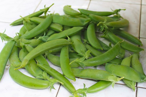 Harvested Snap Pea