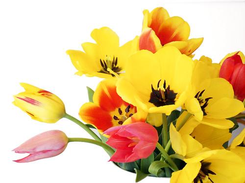 Tulpen vom Märt